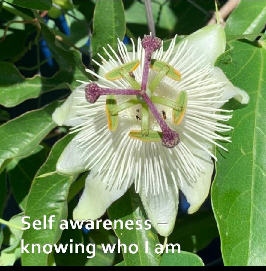 LifeForward Resilience Self awareness